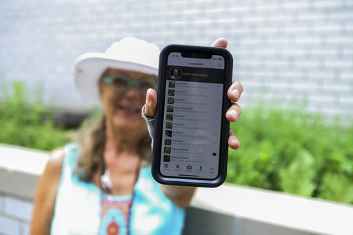 (AP Photo/Emiliano Rodriguez Mega). In this July 27, 2018 photo, Susan Hewitt poses for a picture showing her profile on iNaturalist, the app where she records all the plants and animals she finds in New York City. With 7,379 observations and 736 speci...