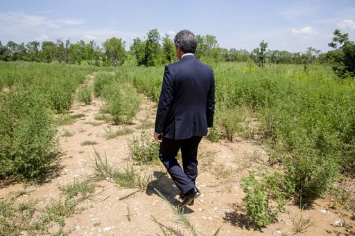 (AP Photo/Karen E. Segrave). In this July 25, 2018, photo, Stephen Bell, president and CEO of the Arkadelphia Area Chamber of Commerce, shows parts of the 900-acre site of what he hopes will be a new paper mill in Arkadelphia, Ark. State and local offi...