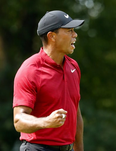 (AP Photo/Brynn Anderson). Tiger Woods celebrates after sinking his birdie putt on the ninth green during the final round of the PGA Championship golf tournament at Bellerive Country Club, Sunday, Aug. 12, 2018, in St. Louis.