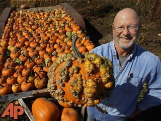 Pumpkin farmers have smashing crop despite drought