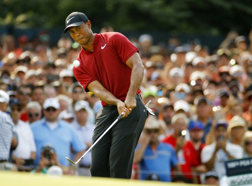 (AP Photo/Charlie Riedel). Tiger Woods chips onto 14th green during the final round of the PGA Championship golf tournament at Bellerive Country Club, Sunday, Aug. 12, 2018, in St. Louis.