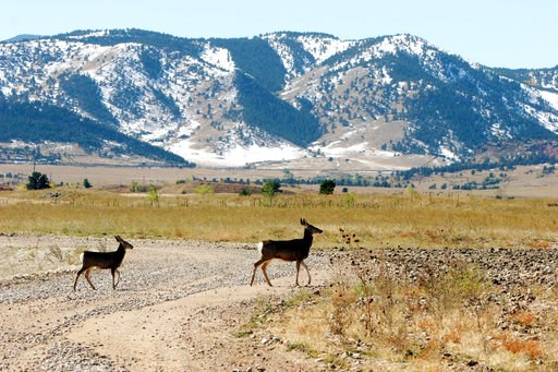 (AP Photo/Ed Andrieski, File). FILE - In this Oct. 13, 2005, file photo, deer cross a road striped of its asphalt at the former Rocky Flats Nuclear Weapons plant near Golden, Colo. The U.S. Interior Department says it will go ahead with plans to open a...