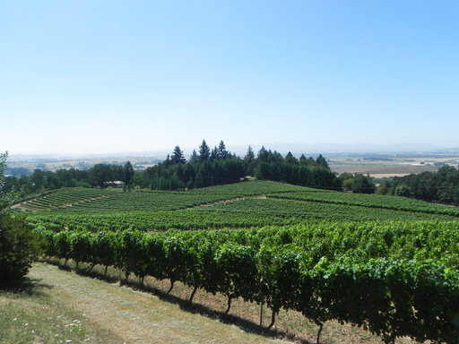 (AP Photo/Joseph B. Frazier, file). FILE--This Aug. 2012, file photo shows vines spilling down toward the Willamette Valley in Amity, Ore. Some Oregon lawmakers and winery owners are scrambling to help a dozen vineyards owners who face having 2,000 ton...