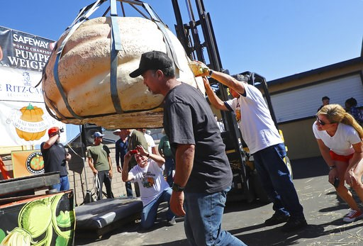 (Aric Crabb/Bay Area News Group via AP). Judges inspect the first place pumpkin in the 45th annual Safeway World Championship Pumpkin Weigh-Off on Monday, Oct. 8, 2018, in Half Moon Bay, Calif. A commercial pilot from Oregon raised a giant pumpkin weig...