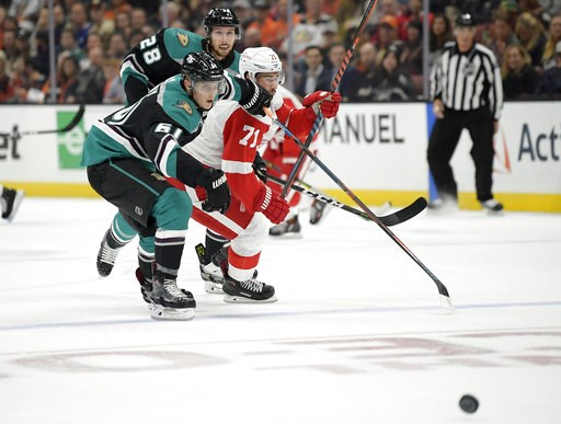 (AP Photo/Mark J. Terrill). Anaheim Ducks right wing Troy Terry, left, and Detroit Red Wings center Dylan Larkin, right, battle for the puck as defenseman Marcus Pettersson (28), of Sweden, watches during the first period of an NHL hockey game Monday, ...