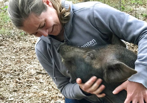 (Jenifer Vickery/Tomtem Farm and Sanctuary via AP). In this undated photo provided by taken in Gilford, N.H., Grover is held by Michele Devereaux. An animal sanctuary and a farm are working together to spare Grover, a slaughterhouse-bound piglet, to pr...