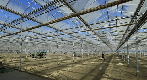 (AP Photo/Ted S. Warren). In this Sept. 25, 2018 photo, a worker walks through a massive tomato greenhouse being renovated to grow pot in Delta, British Columbia, that is operated by Pure Sunfarms, a joint venture between tomato grower Village Farms In...