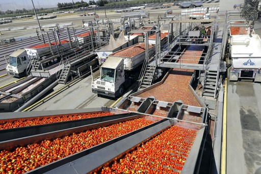 (AP Photo/Marcio Jose Sanchez, File). FILE- In this Sept, 17, 2018, file photo tomatoes go through a washing process at the Los Gatos Tomato Products plant in Huron, Calif. On Friday, Nov. 9, the Labor Department reports on U.S. producer price inflatio...