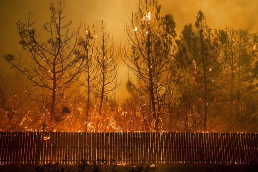 (AP Photo/Noah Berger). Flames climb trees as the Camp Fire tears through Paradise, Calif., on Thursday, Nov. 8, 2018. Tens of thousands of people fled a fast-moving wildfire Thursday in Northern California, some clutching babies and pets as they aband...