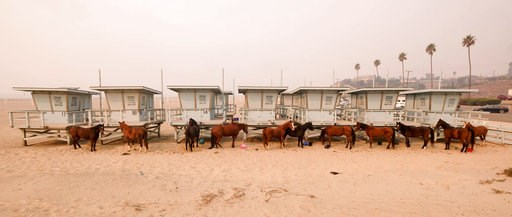 (AP Photo/Ringo H.W. Chiu). Horses are tied to lifeguard booths on the beach in Malibu, Calif., Saturday, Nov. 10, 2018. Wildfires are burning in both Southern and Northern California.