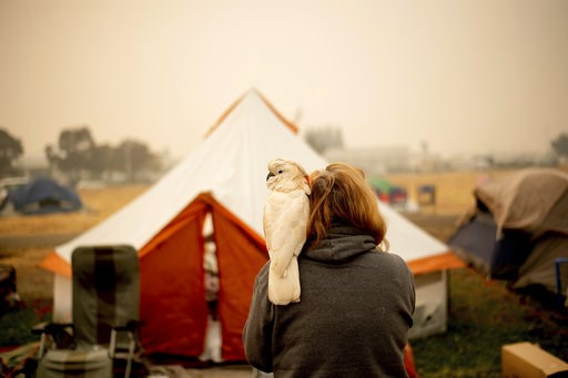 (AP Photo/Noah Berger). Suzanne Kaksonen, an evacuee of the Camp Fire, and her cockatoo Buddy camp at a makeshift shelter outside a Walmart store in Chico, Calif., on Wednesday, Nov. 14, 2018. Kaksonen lost her Paradise home in the blaze.