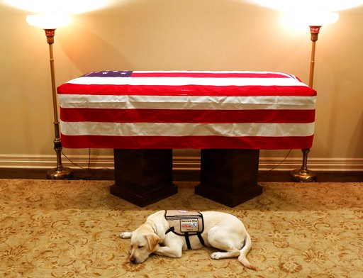 (Evan Sisley/Office George H.W. Bush via AP). This Sunday, Dec. 2, 2018 photo, Sully, President George H.W. Bush's service dog lies in front of his casket in Houston. The 41st president died Friday at his home in Houston at 94.