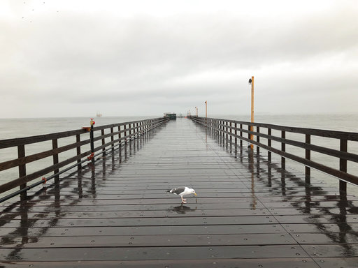 (AP Photo/Michael R. Blood). A lone seagull stands in the rain on the Seal Beach Pier on Thursday, Dec. 6, 2018 in Seal Beach, Calif. The second round of a fall storm dumped snow and rain that jammed traffic on Southern California highways and loosened...