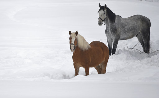 (Angelika Warmuth/dpa via AP). Horses stand in the snow  in Garmisch-Partenkirchen, southern Germany, Monday. Jan. 7,  2019, after large parts of southern Germany and Austria were hit by heavy snowfall.