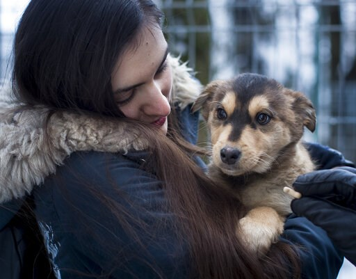 (AP Photo/Mindaugas Kulbis). In this photo taken on Friday, Feb. 1, 2019, a potential pet owner looks at a stray dog at a shelter in Vilnius, Lithuania. A group of animal enthusiasts in Lithuania have created the GetPet mobile app inspired by the popul...