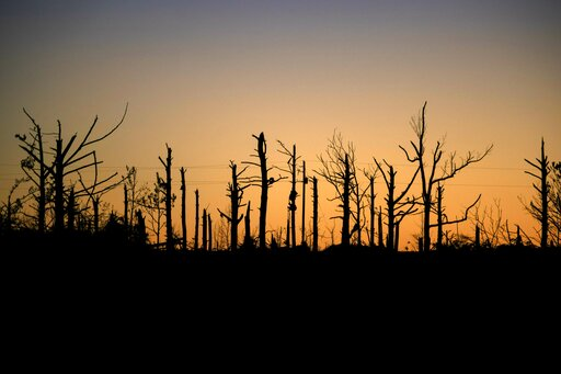 (AP Photo/David Goldman). Trees stripped of their branches from a tornado stand against the setting sun in Beauregard, Ala., Tuesday, March 5, 2019.