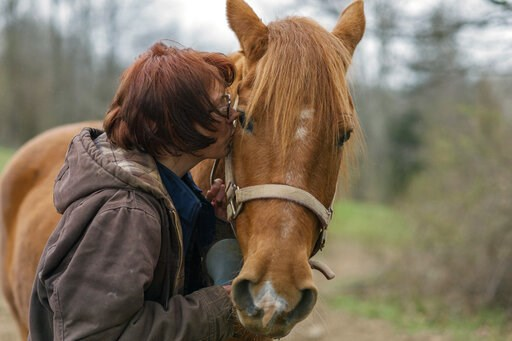 (AP Photo/Craig Hudson). In this Friday, April 5, 2019, photo, Kelly Povroznik kisses her horse Rambling Jack goodbye after having tended to him and her other horse Blackjack at their pasture outside of Clarksburg, W.Va. Povroznik teaches an online col...