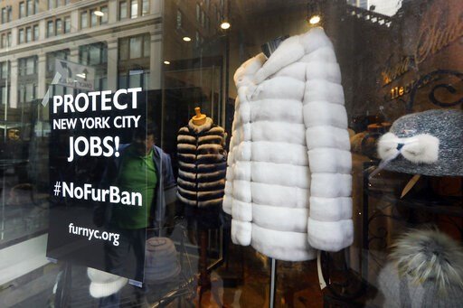 (AP Photo/Richard Drew). This April 10, 2019, photo shows a sign by furnyc.org in the window of Victoria Stass Collection in New York's fur district. The fur trade is considered so important to New York's development that two beavers adorn the city's o...