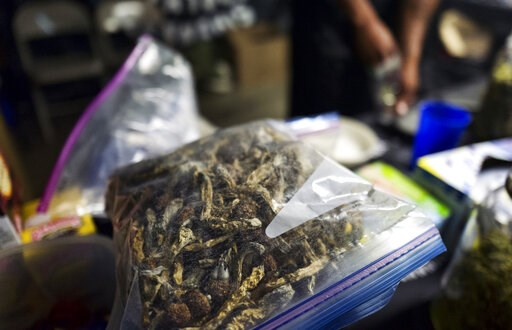 (AP Photo/Richard Vogel). A vendor bags psilocybin mushrooms at a pop-up cannabis market in Los Angeles on Monday, May 6, 2019. Voters decide this week whether Denver will become the first U.S. city to decriminalize the use of psilocybin, the psychedel...