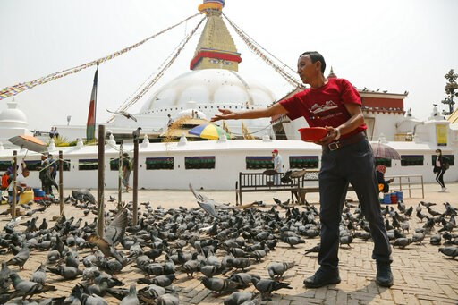 (AP Photo/Niranjan Shrestha). In this May 9, 2019 photo, Apa Sherpa feeds pigeons in Boudhanath Stupa in Kathmandu, Nepal. Apa Sherpa has stood on top of the world more times than all but one other person. Now he wants to make sure no one feels compell...