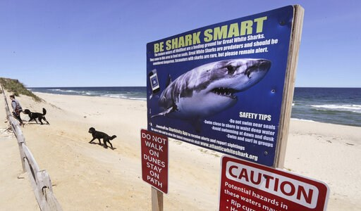(AP Photo/Charles Krupa). In this May, 22, 2019, photo, a woman walks with her dogs at Newcomb Hollow Beach, where a boogie boarder was bitten by a shark and later died of his injuries the previous summer, in Wellfleet, Mass. Cape Cod beaches open this...