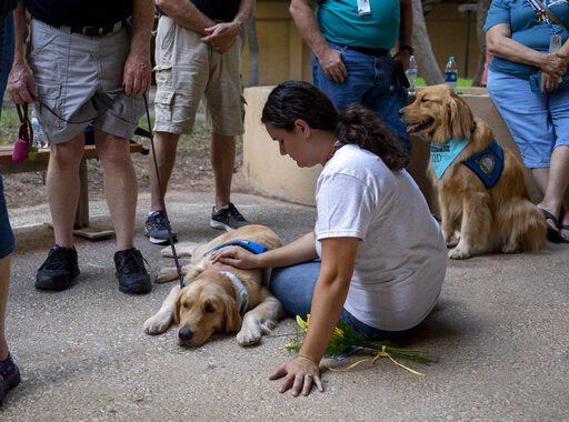 (Jacy Lewis/Reporter-Telegram via AP). Katelyn Cooper pets a comfort dog during a vigil, Sunday, Sept. 1, 2019, at the University of Texas of the Permian Basin, in Odessa, Texas, for victims of a shooting spree the day before.